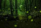 پارکی سحرآمیز و زیبا در چین
