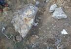کشف بقایای جانور عظیمالجثه باستانی نادر در اردبیل